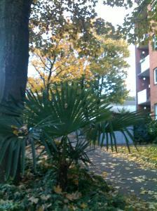 Palma en una calle de Dusseldorf en Otoño